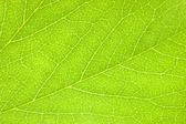Green Leaf Macro Background Texture — Stock Photo