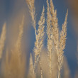 Gentle Bokeh Stalk Grass — Stock Photo