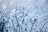 Snowy Branches In Blue — Stock Photo