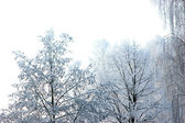 Perfect Winter day and New Snow Isolated — Stock Photo