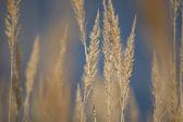 Bokeh suave tallo del pasto — Foto de Stock