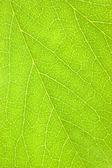 Green Leaf Macro Background Texture — Stock Photo