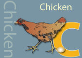 C for Chicken — Stock Photo