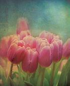 Grungy Tulips — Stock Photo