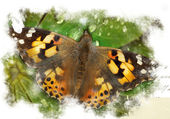 Colorful abstract illustration with butterfly — Stock Photo