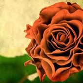 Retro stijl achtergrond met roos — Stockfoto