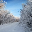 Winter forest, trees covered with rime — Stock Photo #7941831