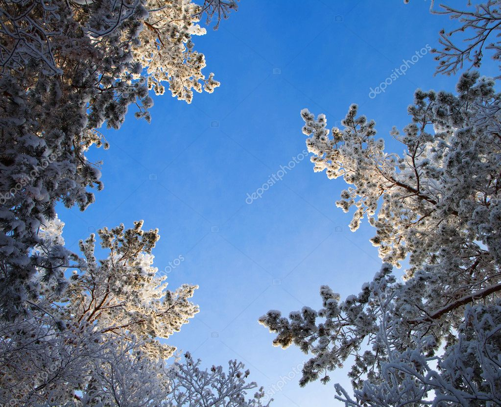 Winter forest, trees covered with rime — Stock Photo #7942170