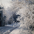 Winter forest, trees covered with rime — Stock Photo #7952128