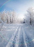 Winter forest, trees covered with rime — Photo
