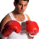 Постер, плакат: Boxer