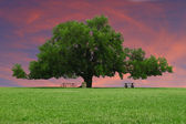 Sunsetting Sky Behind an oak tree — Stockfoto