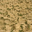 Plowed soil - Stock Photo