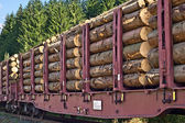 Transporting wooden logs — Stock Photo