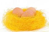 Fresh eggs in the nest — Stock Photo