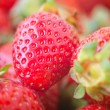Beautiful strawberry healthy natural fresh food closeup — Stock Photo