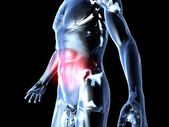 Belly Ache - Anatomy — Stock Photo