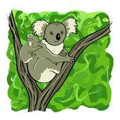 Koala family — Stock Vector