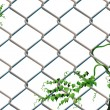 Stock Vector: Barbed wire with ivy