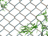Barbed wire with ivy — Stock Vector