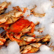 Fresh Crab on Ice - Stock Photo