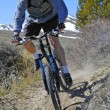 Mountain Biking - Stock Photo