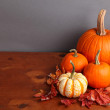 Decorative Fall Pumpkins — Stock Photo