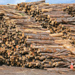 Lumber Piles — Stock Photo