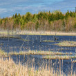 Northern Swamp — Stock Photo