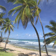 Bathsheba Beach — Stock Photo