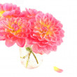 Dahlias — Stock Photo #7163679