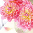 Garden Dahlias — Stock Photo #7853126