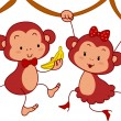 Monkey Couple — Stock Photo