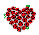 Valentine Lady Bugs — Stock Photo