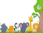 Animal Kingdom — Stock Photo