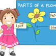 Stock Photo: Parts of Flower