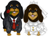Dachshund Wedding — Stock Photo