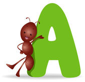 A for Ant — Stock Photo
