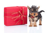 Toy puppy standing near a big present — Стоковое фото