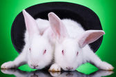 Evil bunnies in a hat — Stock Photo