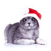 Suspicious little santa cat — Stockfoto