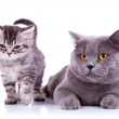 ������, ������: Adorable cats