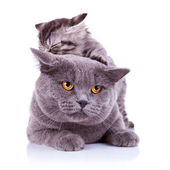 Cute playful cats — Stock Photo
