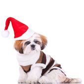 Симпатичные Ши-тцу Санта — Стоковое фото