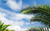 Blue sky with palm trees — Stock Photo