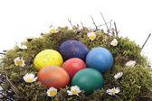 Barevné vejce v ptačí hnízdo nad bílá — Stock fotografie