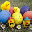 Colored easter eggs and chicks — Stock Photo #7883121