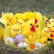 Easter chicks on grass background - Stock Photo