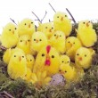 Easter chicks in bird nest  over white — Foto Stock