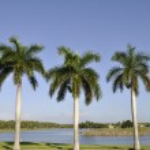 Three palm trees — Stock Photo #6987460